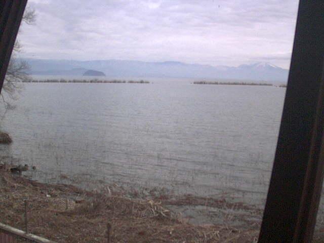 琵琶湖湖西の野鳥情報発信